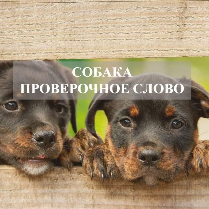 Собака проверочное слово