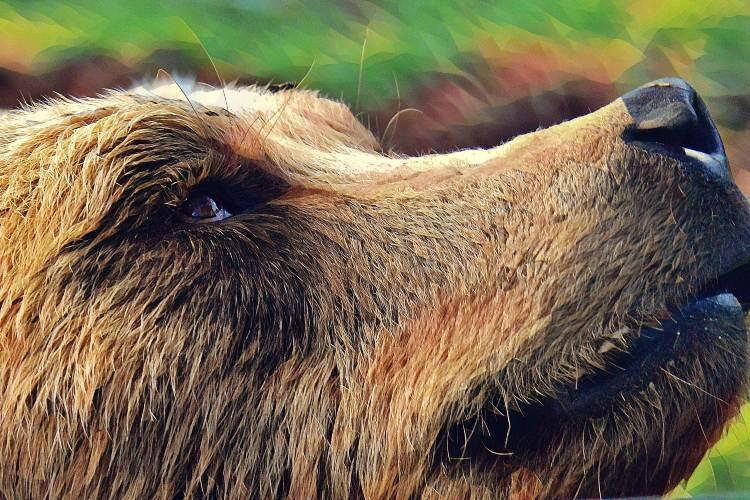 Корень в слове медведь