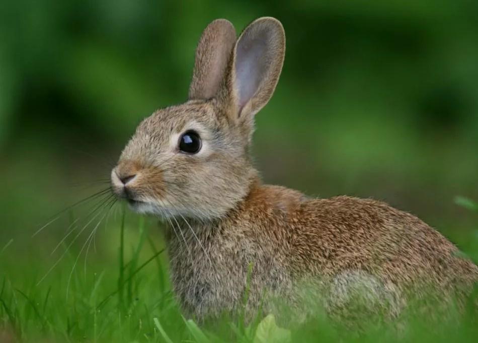 Корень в слове заяц