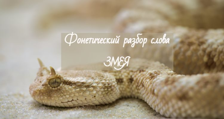 Змея фонетический разбор слова