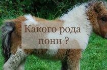 Какого рода пони ?