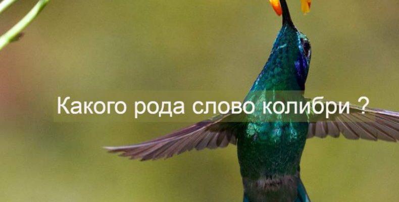 Какой род существительного калибри