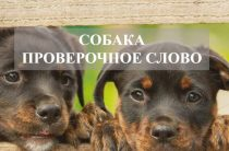 Собака: проверочное слово или словарная форма